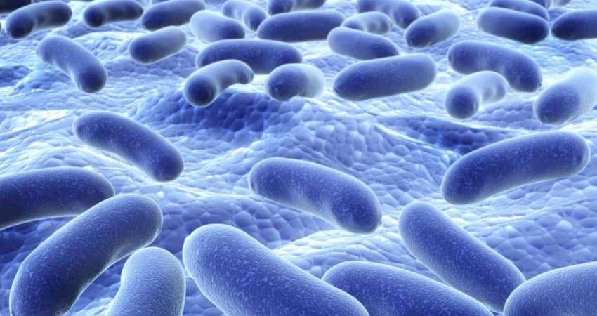пробиотики при гипотиреозе